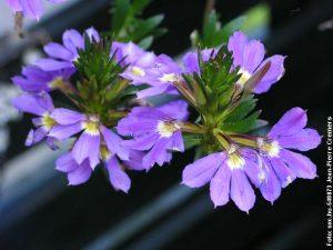 Hortensien-schneiden