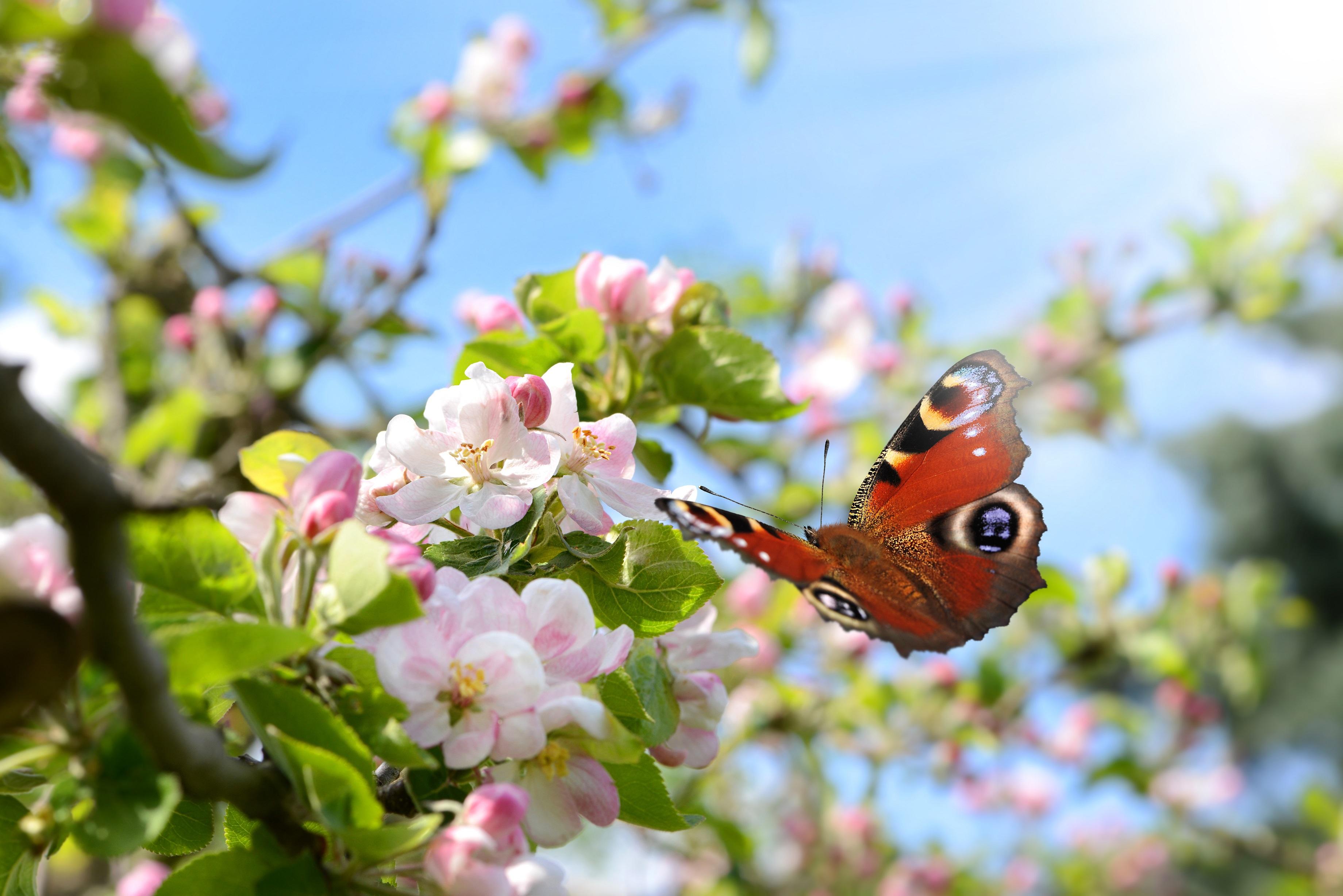 erste glockenblume im steingarten