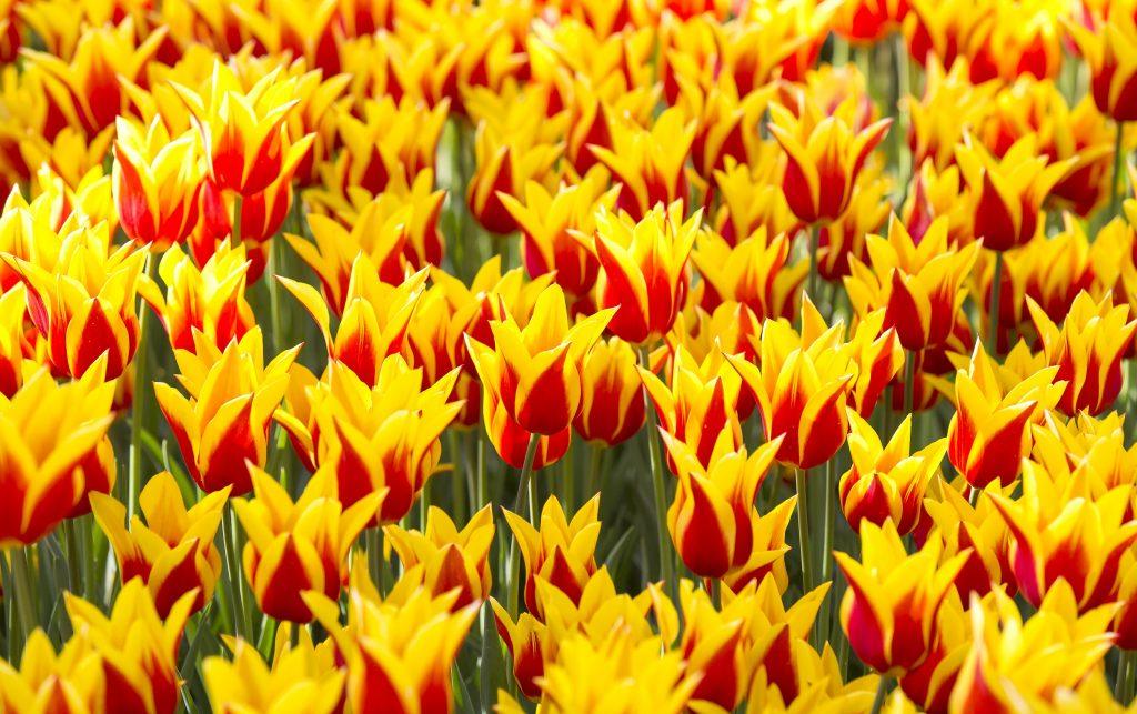 Es muss nicht immer rot sein, gelb- rot ist doch auch herrlich anzuschaun