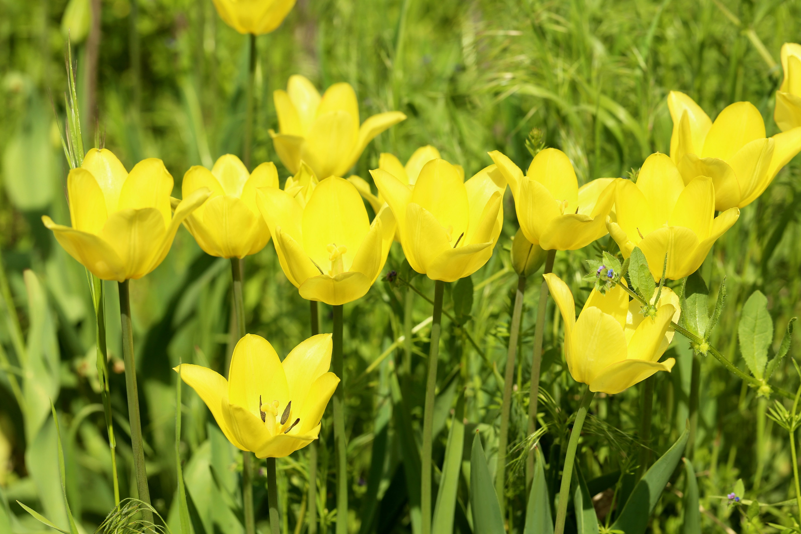 Tulpen Richtig Pflanzen Und Pflegen Tulpen Im Garten Tipps Rund Um Die Pflege Fur Die Fruhlingsblumen