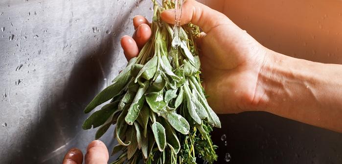 Pfirsich Salbei: Außergewöhnliche Pflanze für die Sinne