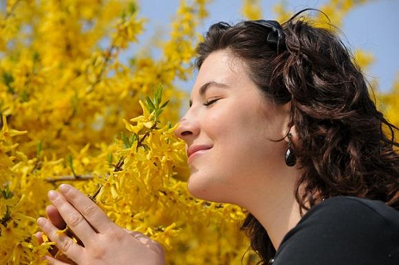 Die häufigste und auch die wohlbekannteste Blütenfarbe bei Genista-Pflanzen ist gelb
