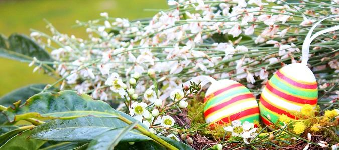 Durch die tief in das Erdreich wachsende Pfahlwurzel ist es nicht empfehlenswert, einen Ginster umzupflanzen.