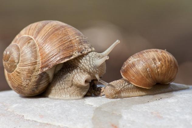 Weinbergschnecken überleben aber nicht immer ohne Weiteres in hiesigen Gärten, weshalb vor der Anschaffung genaue Informationen über die genaue Haltung der einzelnen Arten einzuholen sind.(#02)
