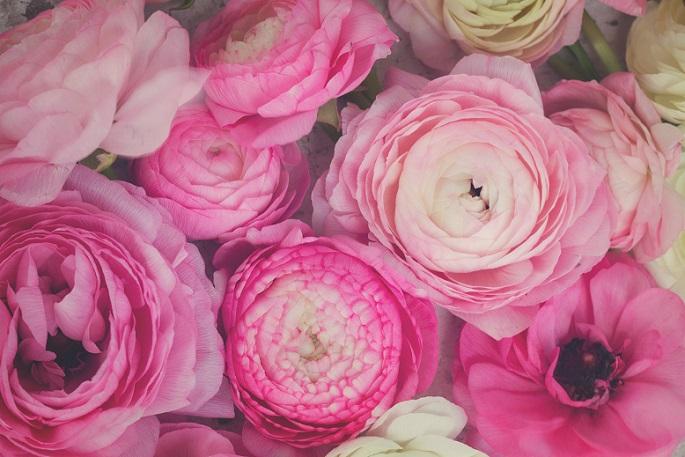 Die leuchtenden Blüten, wie sie hier auf dem Bild zu sehen sind, künden vom nahenden Frühling und sind typisch für Ranunkel. (#11)