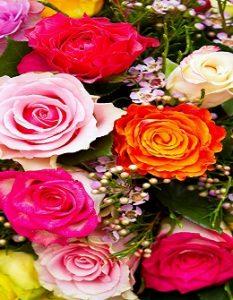 20 schöne Blumen: Natur und Blütenfreude für Haus und Garten20 schöne Blumen: Natur und Blütenfreude für Haus und Garten