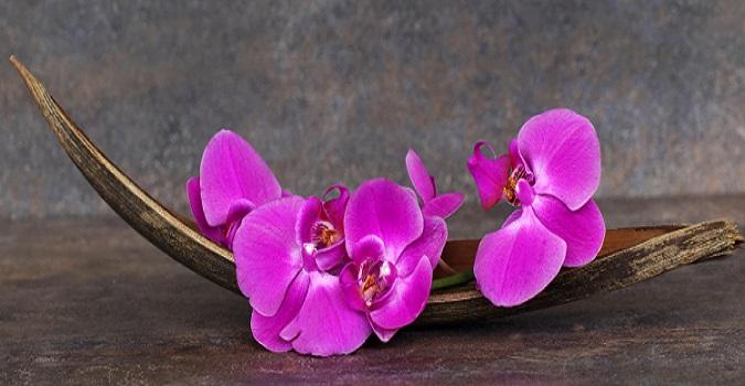 Orchideen finden sich in vielen verschiedenen Arrangements und Varianten. (#06)