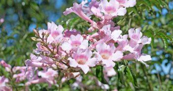 Kletterpflanzen in Spanien: Pflanze & Früchte erkennen