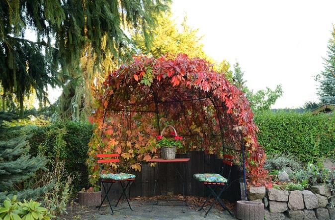 Der Wein findet aber auch zur Verzierung im Garten oft Anwendung und sorgt für einen Blickfang. (#05)