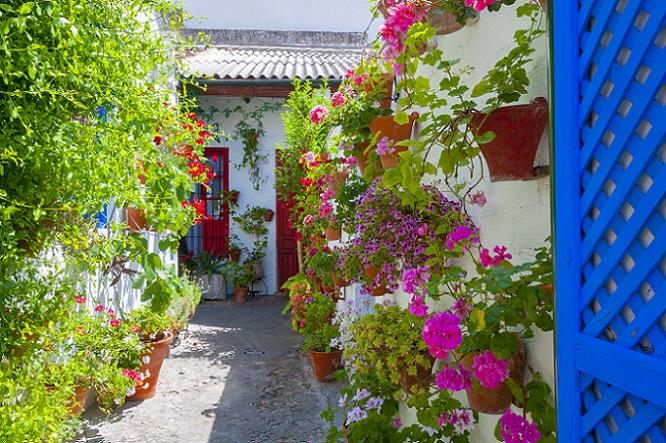 Es gibt verschiedene Arten von Kletterpflanzen, die sich gerade unter der Sonne von Spanien besonders wohlfühlen. Einige haben so exotische Blüten, dass sie die Aufmerksamkeit der Touristen auf sich ziehen. (#08)