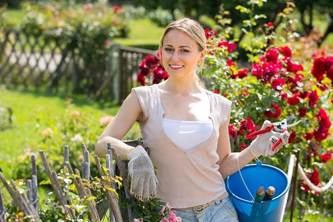 Die Pflege von einem Rosenstock beginnt bereits beim Start mit den Pflanzen. (#01)