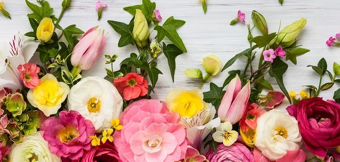 Frühlingsblumen in Töpfen, in der Vase – und im Garten!
