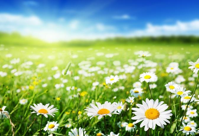 Das wichtigste für Frühlingsblumen ist neben der Sonne natürlich auch Pflege. Dieser Aspekt und der damit verbundene Zeitfaktor dürfen beim Anpflanzen keinesfalls außer Acht gelassen werden. (#01)