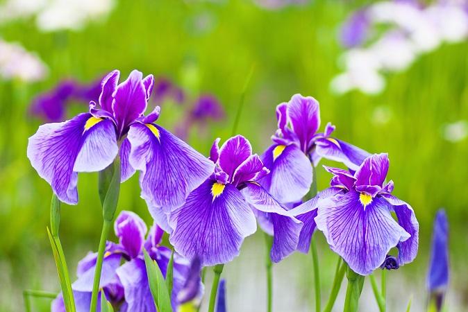 Der Beginn des Frühlings ist immer etwas Besonderes. Die Natur erwacht aus ihrem langen Tiefschlaf, die Vögel beginnen wieder zu singen und die ersten zarten Knospen zeigen sich. (#02)