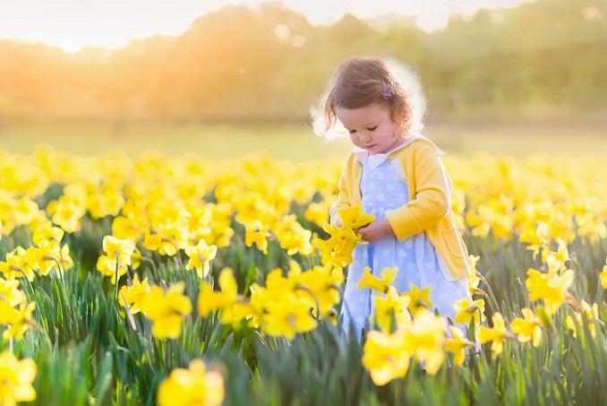 Wer kennt sie nicht: die leuchtenden Frühlingblumen mit der sternförmigen Blüte? Besonders zur Osterzeit wimmelt es in den Blumengeschäften von Narzissen. Beliebt sind sie tatsächlich schon seit langem. Bereits Mitte des 16. Jahrhunderts kannte man diese gelbe Frühlingsblume. (#03)