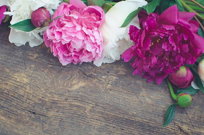 Es gibt unzählige Arten von Rosen in den verschiedensten Farben, aber die Pfingstrose gehört wohl zu den schönsten. Es gibt sie, genau wie die Tulpe, gefüllt oder einfach. (#05)