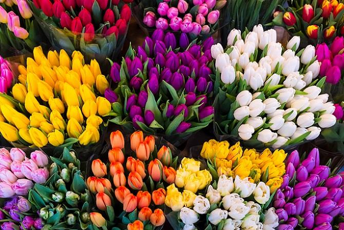 Die Tulpe ist wohl unbestritten die bekannteste unter den Frühlingsblumen. Der einzige wirkliche Konkurrent der Rose blüht in den unterschiedlichsten Farben, am schönsten leuchten aber rote und pinke Tulpen. Man findet diese Frühlingsblumen gefüllt und ungefüllt und sogar zweifarbig. (#04)