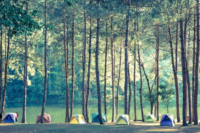 Umgeben von Nichts als Bäumen - erholsames, naturnahes Campen inmitten der Natur. (#3)