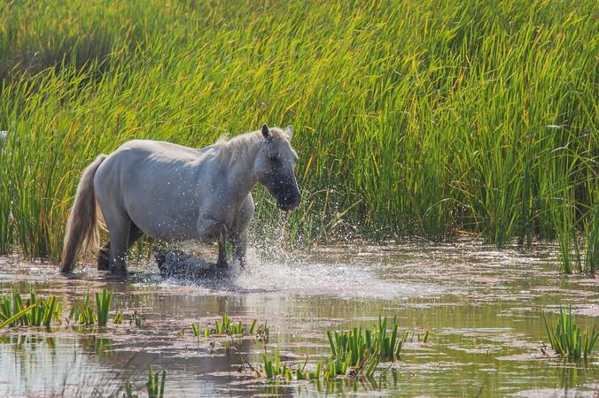 In den wunderschönen Sumpfgebieten und Mooren in Finistère kommt man aus dem Staunen nicht mehr raus! (#4)