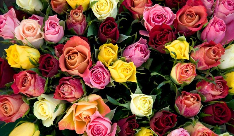 Nach wie vor stehen dabei die Rosen an obersten Stelle, wenn es darum geht, Blumen in Frankreich einkaufen. Das ist jedoch nicht nur ein französisches Phänomen. (#01)