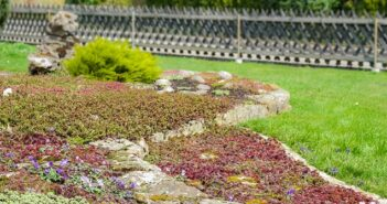 Bodendecker: Tipps zum Einpflanzen