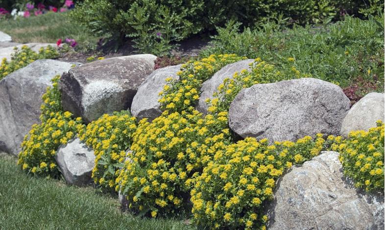 Etwas höhere Staudenpflanzen oder Polstergräser, man kann sich für eine einzelne Sorte entscheiden, die eine größere Fläche bedeckt, oder mehrere Bodendeckerarten miteinander kombinieren. (#01)