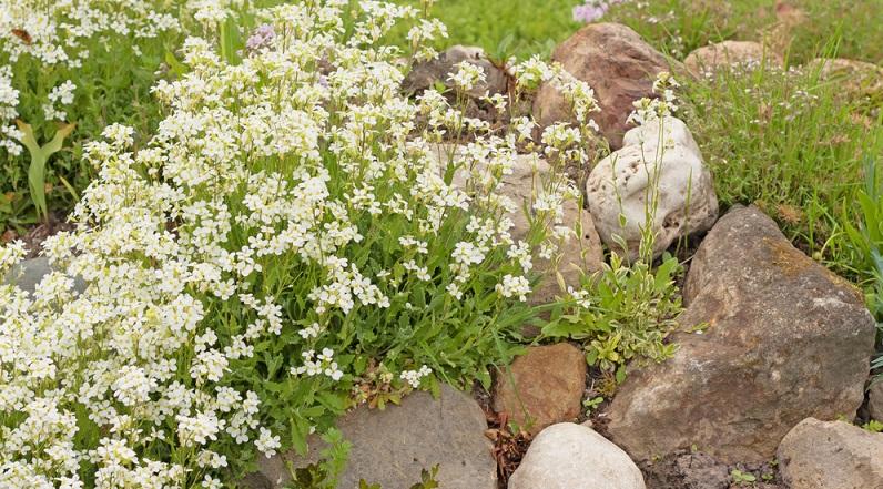 Mit blühenden und genügsamen Bodendeckern entsteht ein schöner und leicht zu pflegender Garten. Man kann vom Frühjahr bis in den Herbst hinein den Bodendeckern beim Blühen und Wachsen zusehen. (#04)