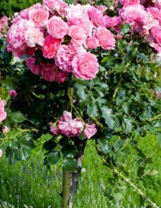Kübelpflanzen richtig überwintern: Tipps und Tricks