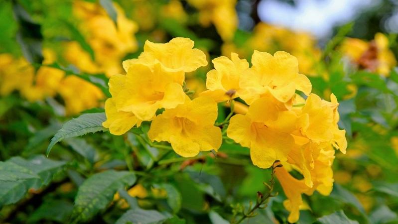 Kaum eine Blume findet sich an so vielen Orten der Welt wie die Glockenblume. Sie kommt natürlich in den verschiedensten Lebensräumen auf der nördlichen Halbkugel vor. (#01)