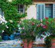 Oleander: Pflege, Schneiden und Überwintern