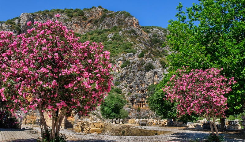 """Der Gattungsname """"Nerium Oleander"""" gibt einen guten Hinweis auf das bevorzugte Wachstumsgebiet des Oleanders. """"Nerium"""" kommt von dem griechischen Wort """"nerion"""", was so viel wie """"nass"""" bedeutet. (#02)"""