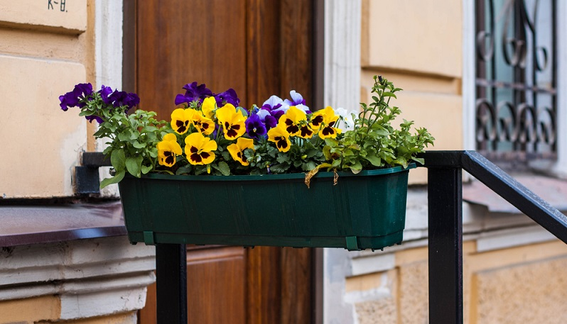 Stiefmütterchen sind ohne Frage ein Klassiker. Schon sehr lange sind sie Teil von Gärten, Terrassen und Parkanlagen. Außerdem bringen sie mit ihren knalligen Farben etwas Leben auf triste Balkone. (#02)