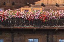 Balkon bepflanzen: Tipps und Know-How für jeden Balkon