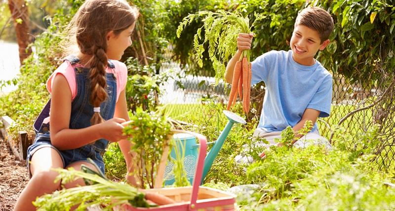 Welche Pflanze benötigt welchen Standort, kann eine Sorte Gemüse im Schatten besser gedeihen oder braucht eine Sorte Halbschatten? (#02)