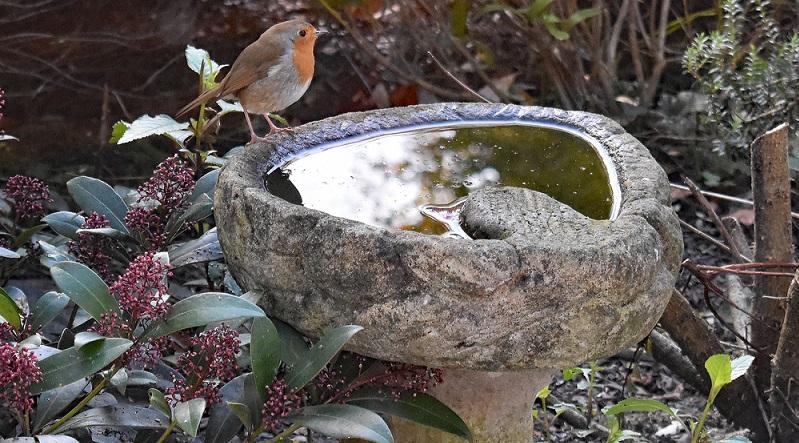 Stellen Sie gemeinsam mit Ihrem Kind eine kleine Wasserschale auf, die als Tränke und Badestelle für Vögel dienen kann. Ihr Kind wird begeistert sein, wenn es die badenden Spatzen beobachten kann. (#03)