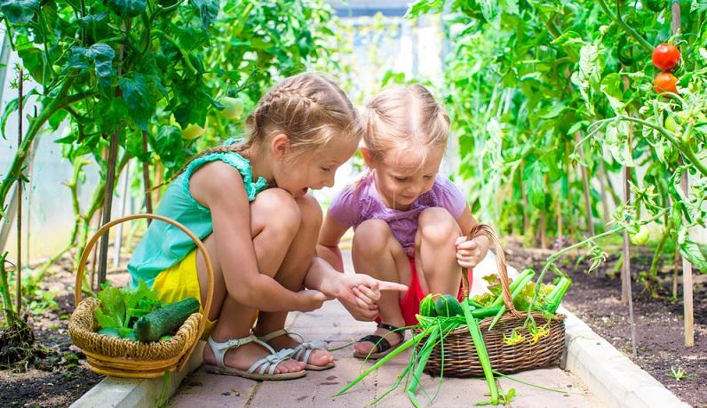 Bei einem kleinen Gewächshaus im eigenen Garten brauchen sich die Hobbygärtner deshalb keine Gedanken über einen störenden Einfluss zu machen – vor allem, wenn sich die Konstruktion schön in den Garten einfügt. (#03)