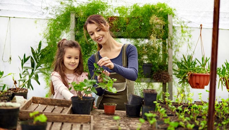 Schon vor einigen Jahrzehnten gab es ein großes Interesse an Gewächshäusern. Sie dienten als Schutz von Gemüse, Obst und Salat, um den Schädlingsbefall zu senken und die Chancen auf einen reichen Ertrag zu fördern. (#01)