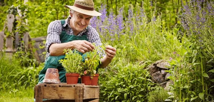 Der Lenz ist da! Was Sie für Ihren Kräutergarten im Frühling wissen müssen