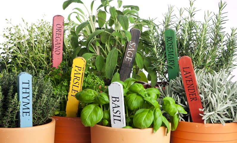 Nebeneinander eingepflanzt, vertragen sich besonders gut: Dill, Majoran, Kerbel, Kresse und Petersilie. (#03)