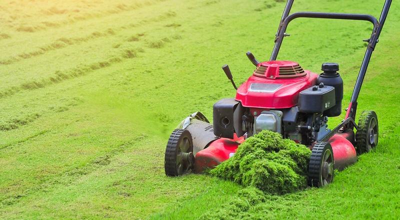 Vor dem ersten Mähen sollten Sie einen frisch angesäten Rasen auf rund sieben bis acht Zentimeter Länge wachsen lassen. (#03)