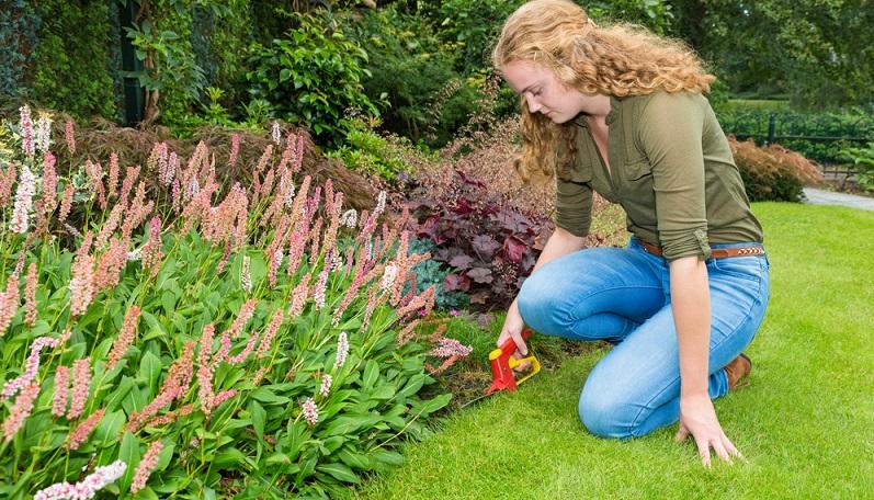 Viele Rasen sind mit einer Rasenkante angelegt, die als gerader, exakt abgestochener Rand für ein sauberes Bild sorgt. (#04)