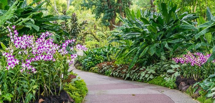 Orchideen für den Garten