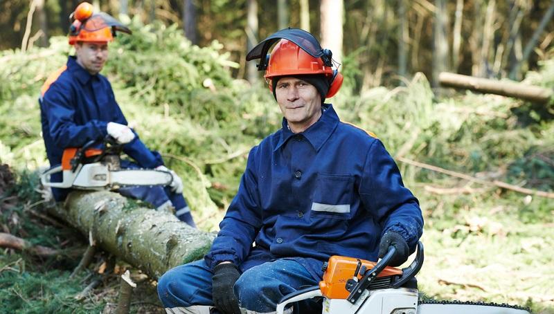 Das Fällen von Bäumen ist normalerweise die Ausnahme, denn die Erhaltung der natürlichen Umgebung sollte in Jedermanns Interesse liegen.