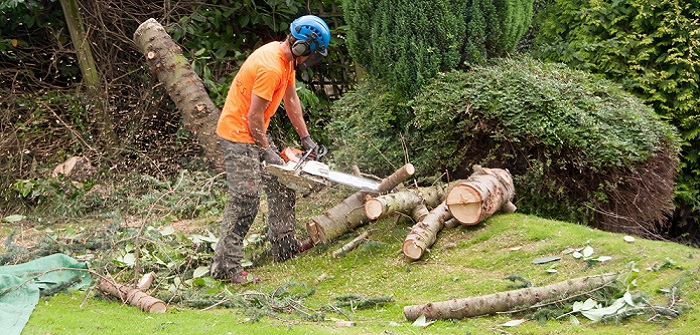 Bekannt Baum fällen: Anleitung zum Bäume richtig fällen RO64