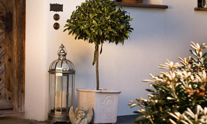 Kübelpflanzen erfreuen sich einer großen Beliebtheit, denn sie sind wunderschöne Eyecatcher und begeistern den Garten-Fan teilweise jahrelang mit üppigem Wuchs und Blütenpracht. (#03)