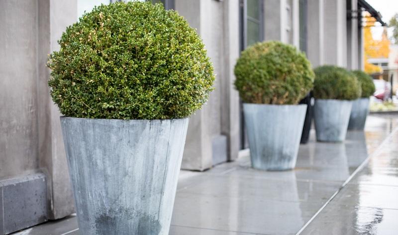 Die Wahl des Pflanzgefäßes ist einerseits Geschmackssache und hängt andererseits von den Bedürfnissen der Pflanzen ab. (#02)