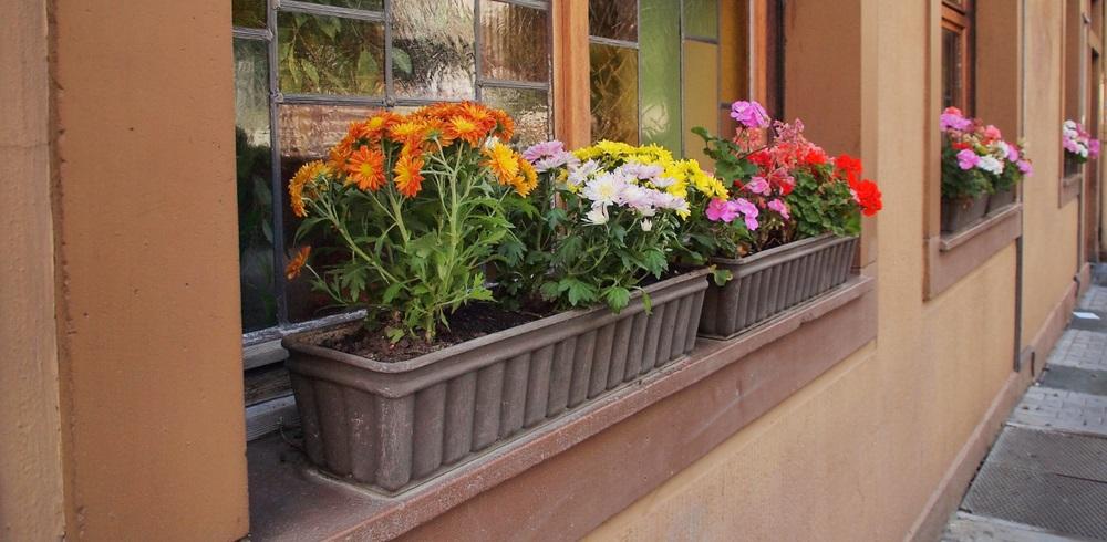 """Vermeintlich billiger """"Plastik-Look"""" und angeblich schlechtere Wachstumsbedingungen für die Pflanzen lassen die Hobby-Gärtner dann doch zu teuren, schweren Pflanzkübeln aus Terrakotta oder Holz greifen.(#06)"""