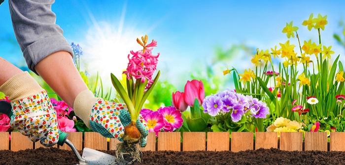 Sommerblumen: Die schönsten Gartenblumen