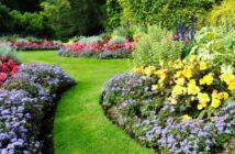 Blumennamen: Die man unbedingt kennen sollte