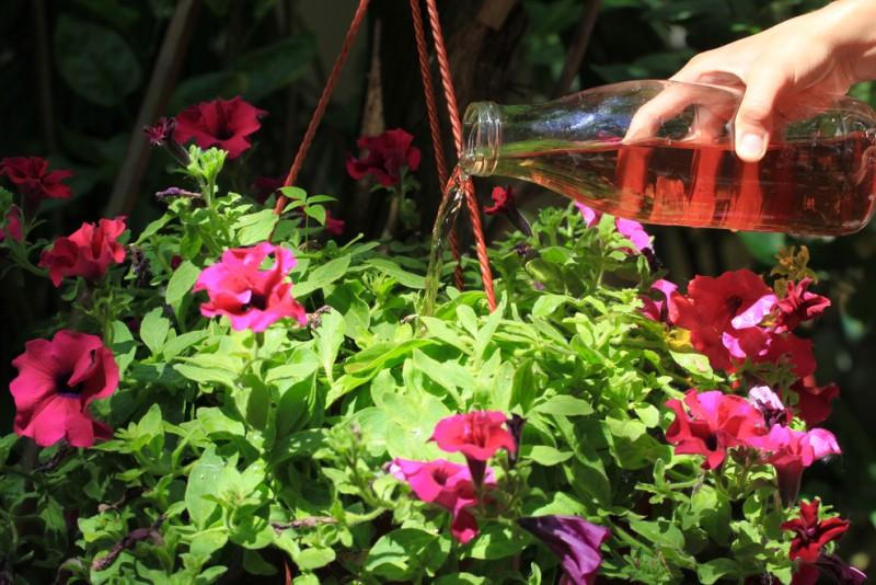 Mittlerweile ist eingefleischten Gärtnern klar, dass es nicht immer einem chemischen Düngemittel bedarf. Auch Hausmittel können helfen und natürlich geht nichts über die richtige Mege Wasser beim Blumen gießen. (#4)